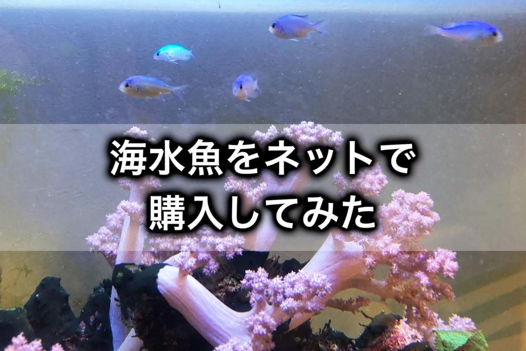海水魚をネットで購入してみた