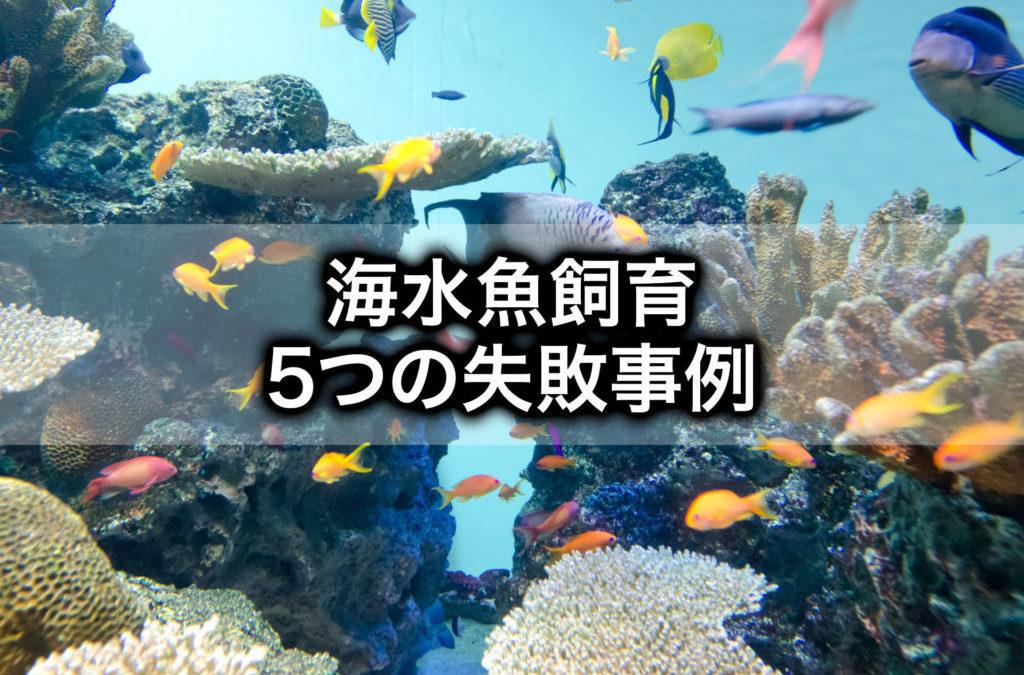 海水魚飼育の失敗事例