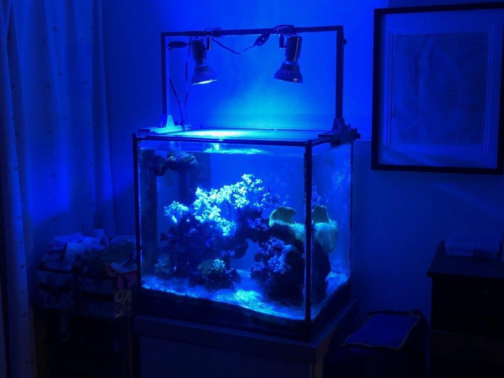 海水魚飼育7年目!我が家のオーバーフロー水槽を紹介