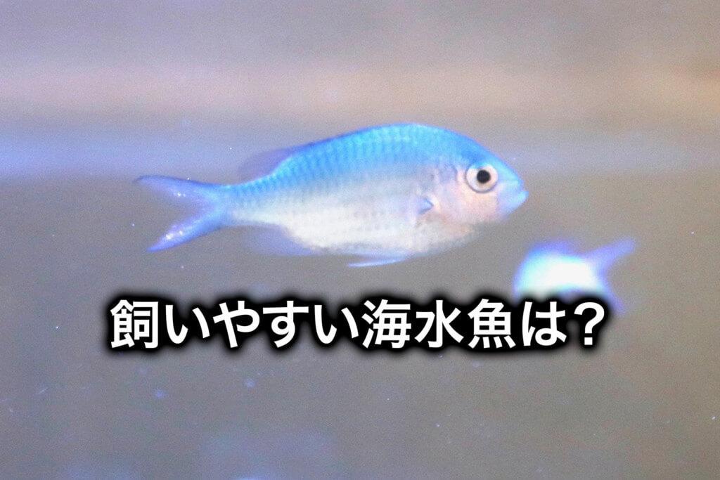 初心者におすすめ!飼いやすい海水魚を選んでみた!