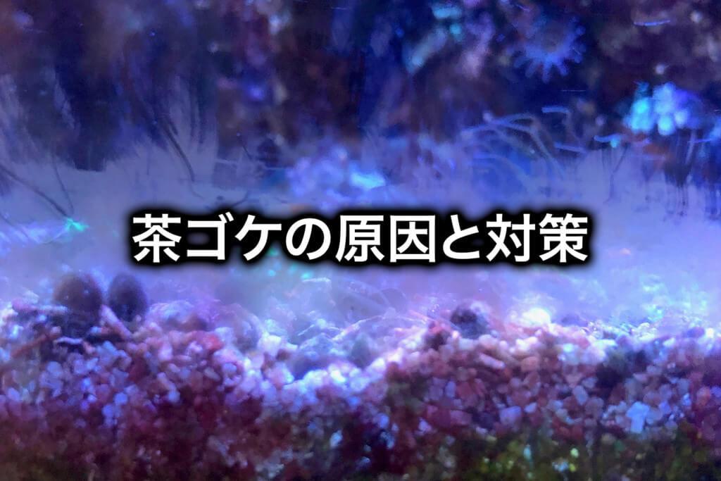 【海水魚水槽】茶ゴケの原因と対策