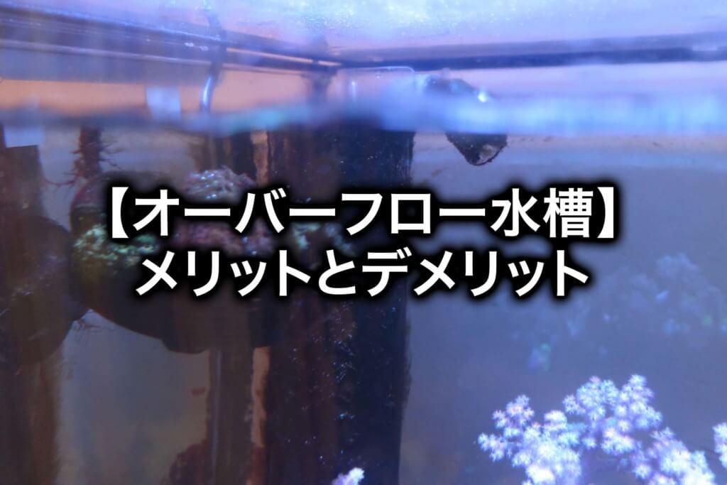 【海水魚飼育】オーバーフロー水槽のメリットとデメリット