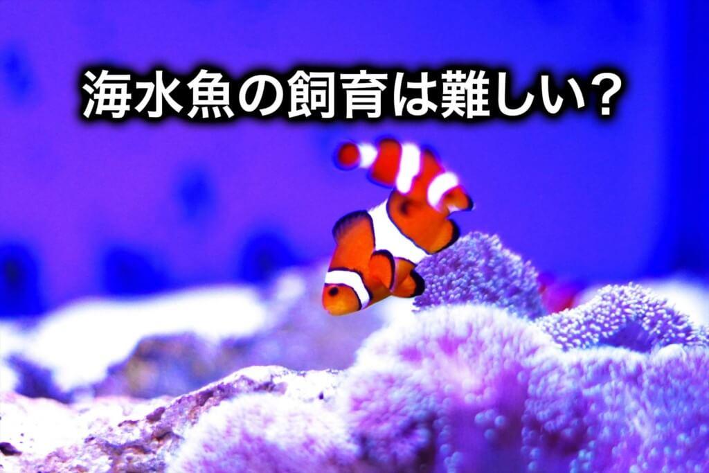 海水魚の飼育は難しい?これだけは知っておきたい失敗しないコツ
