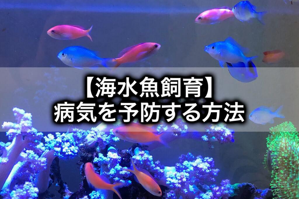 水槽崩壊しないコツは?海水魚の病気を予防する方法